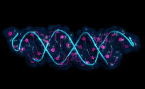 RNA colorato e osservato al microscopio