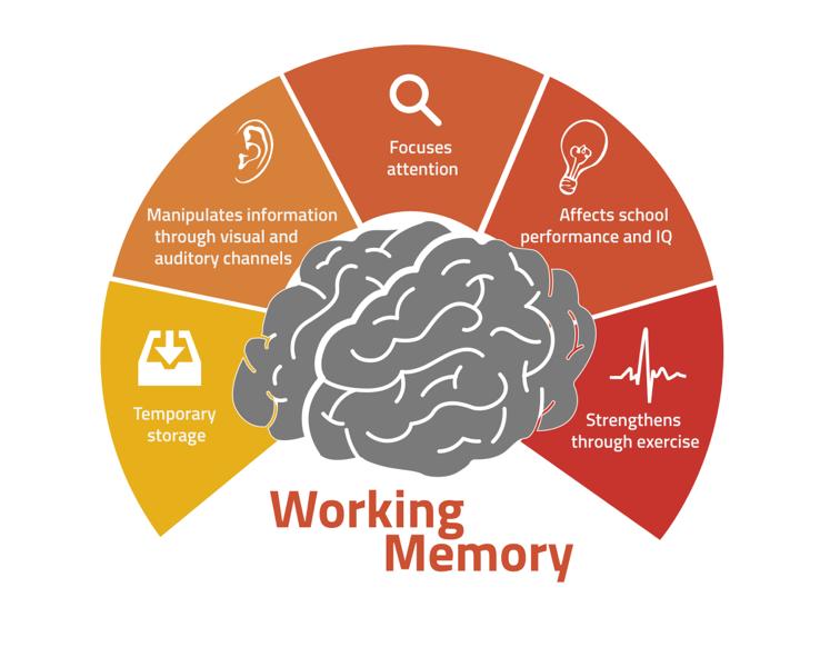 Working memory funzioni