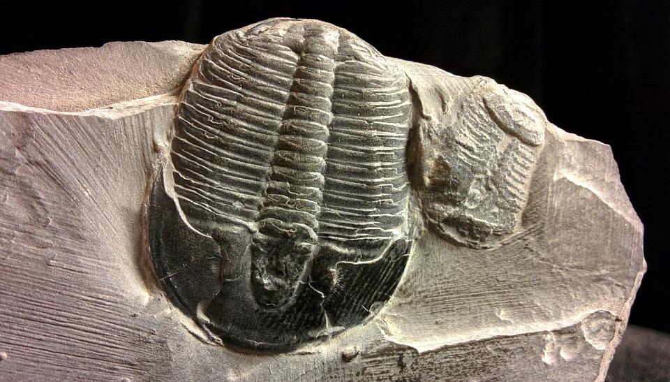 Cambriano