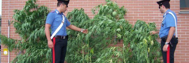 perchè lo stato proibisce le droghe
